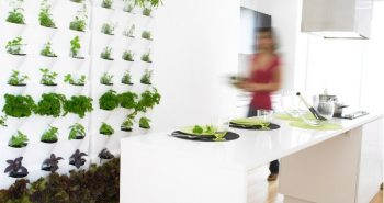 green white kitchen indoor herb garden plant wall