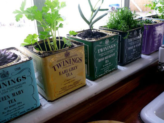 Kitchen herb gardens and salad walls my home rocks for Kitchen herb garden