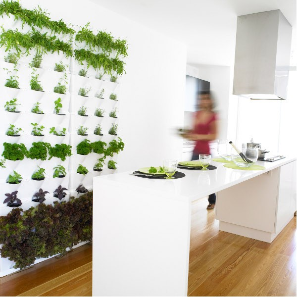 Genial Green White Kitchen Indoor Herb Garden Plant Wall