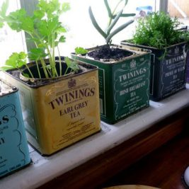 Eclectic kitchen herb garden design repurposed tea tin planters