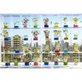 Window herb box planters indoor garden colourful kitchen