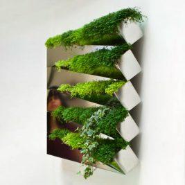 Miroir en Herbe indoor herb garden salad wall