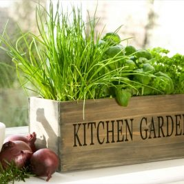 Country kitchen mini garden herb window planter