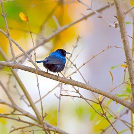 Bird in tree garden wildlife